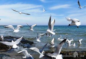 """фотография - Купить! квартира в ЖК Aqua Marine """"Аквамарин"""" . Одесса, Фонтанская дорога, 118 А"""
